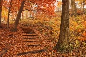 Footpath autumn forest